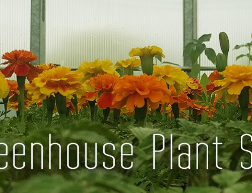 SSHS Greenhouse Plant Sale