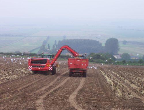 Potato Harvest Changes