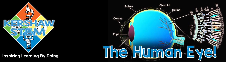 Kershaw STEM: The Human Eye.