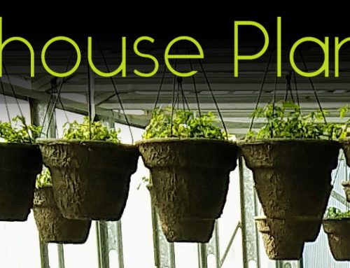 Greenhouse Plant Sale